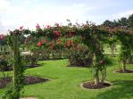 The National Rose garden at Werribee Park