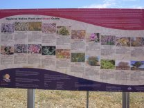 flora information for longreach area