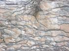 tree-bark-1